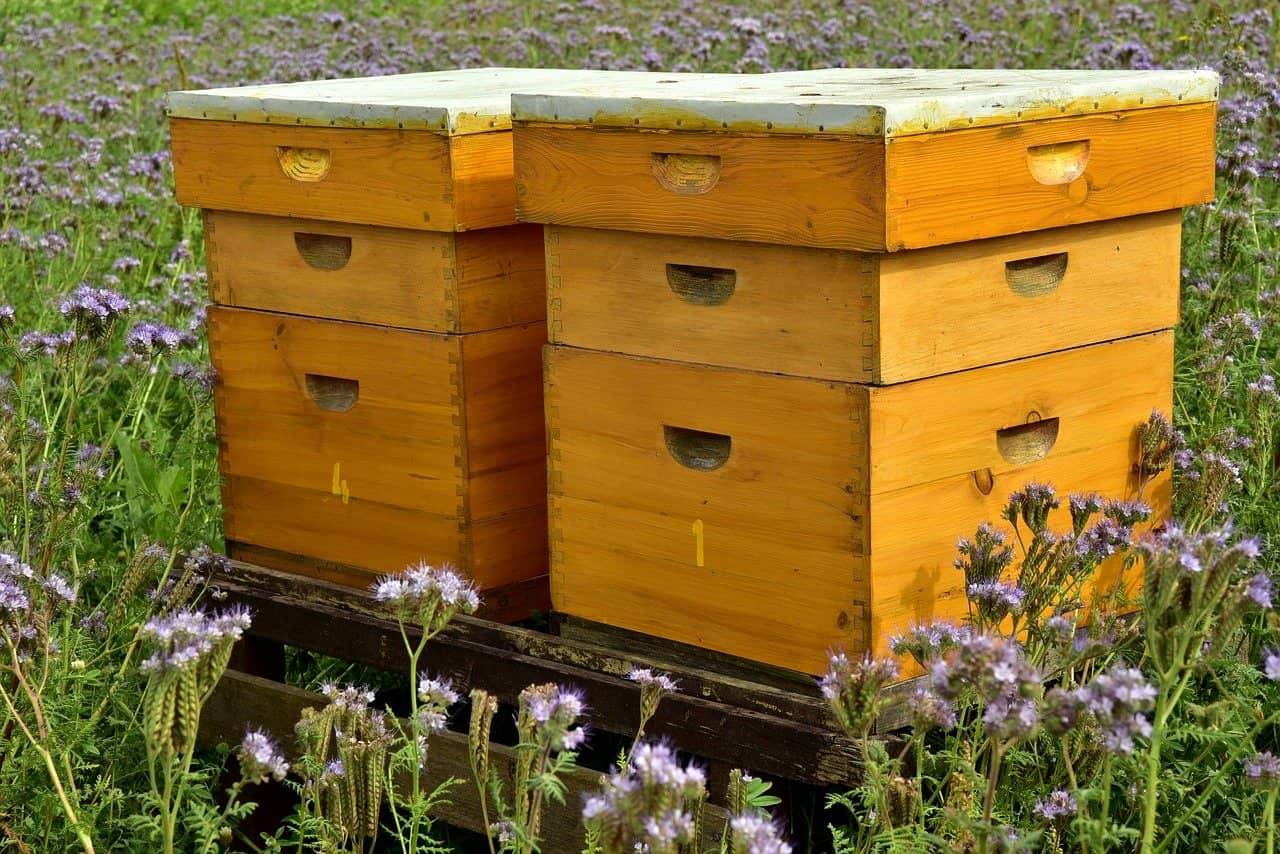 iot apiculture